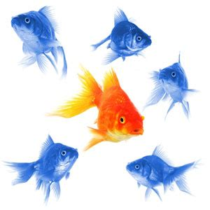 Examples of thesis statements about fish